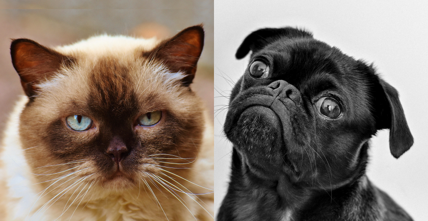 Cat and Dog Peeves About Humans 🐈🐕