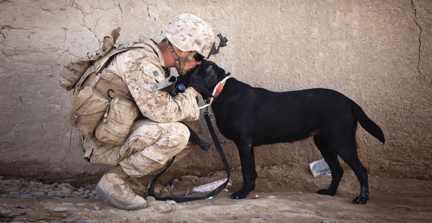Honoring Our Brave K-9 Veterans on March 13 🎖️ 🇺🇸