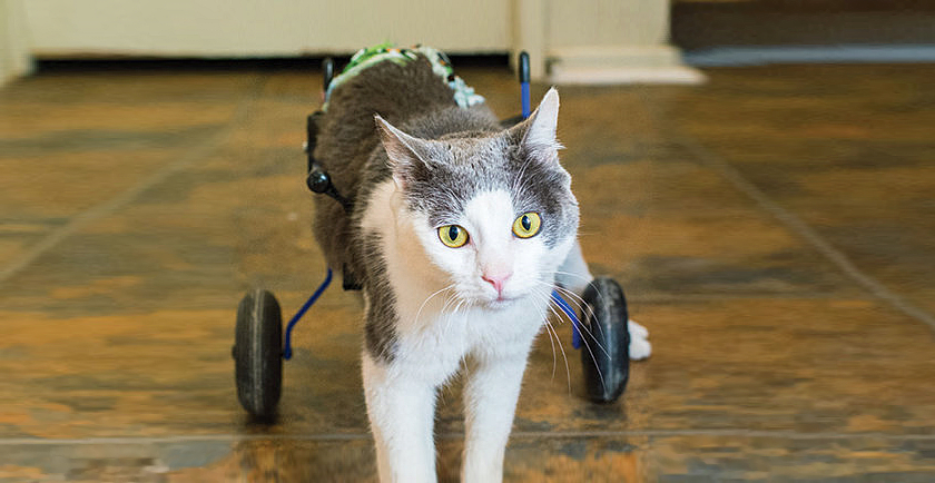 Senior and Special Needs Pet Tips ♿️