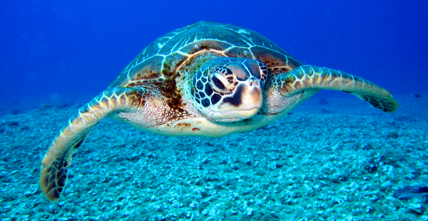 Celebrating World Turtle Day 🥳