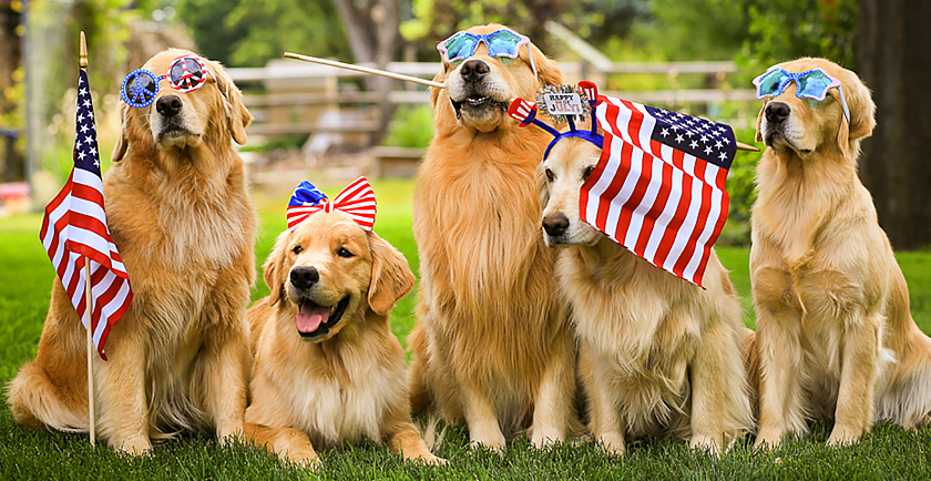 Patriotic Pets on Parade 🇺🇸