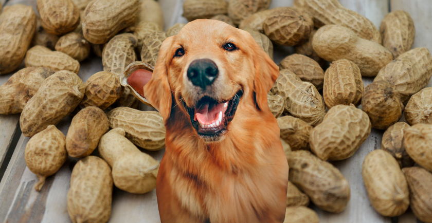 Food Safety: Peanut Butter For Your Dog 🥜