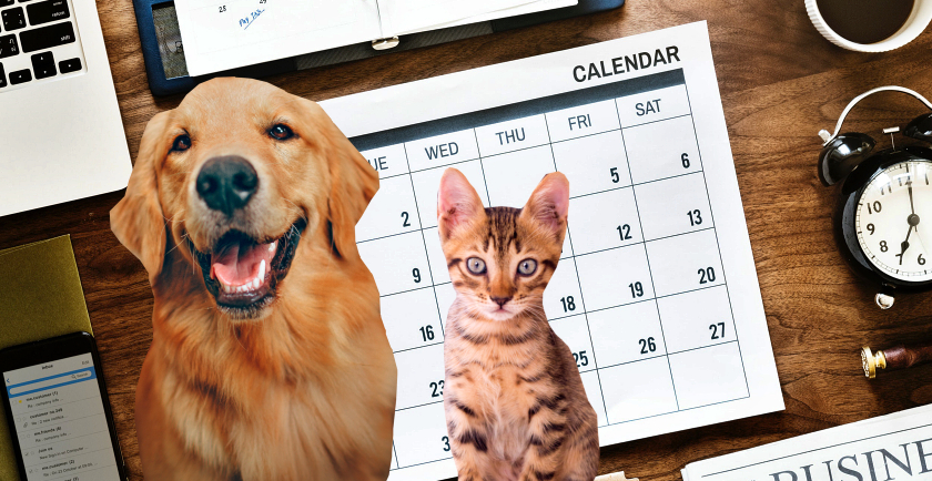 April Pet Awareness Days 🗓️