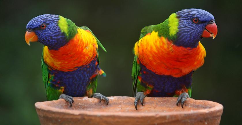 Pet Bird Adoption Tips 🦜
